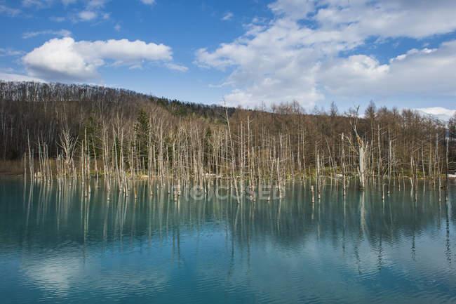 Хоккайдо, Aoi Айк в Національний парк Дайтосуза — стокове фото