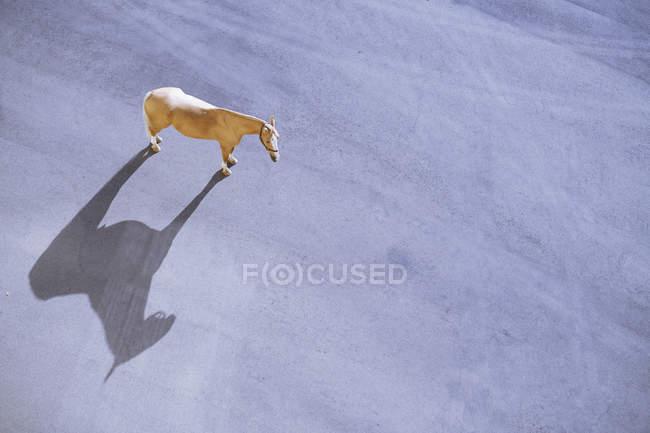 Vue imprenable du cheval debout sur le tarnac au soleil — Photo de stock