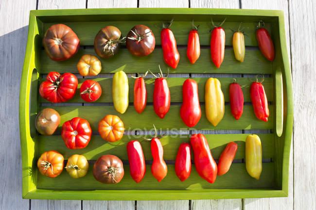 Деревянный лоток с различными помидорами, стадия спелости, незрелый и спелый — стоковое фото