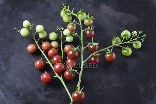 Tomates Risp 'Black Cherry' sur sol sombre — Photo de stock