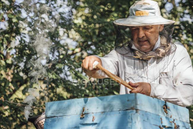 Росія, бджоляр перевіряє каркас з медоносних бджіл — стокове фото