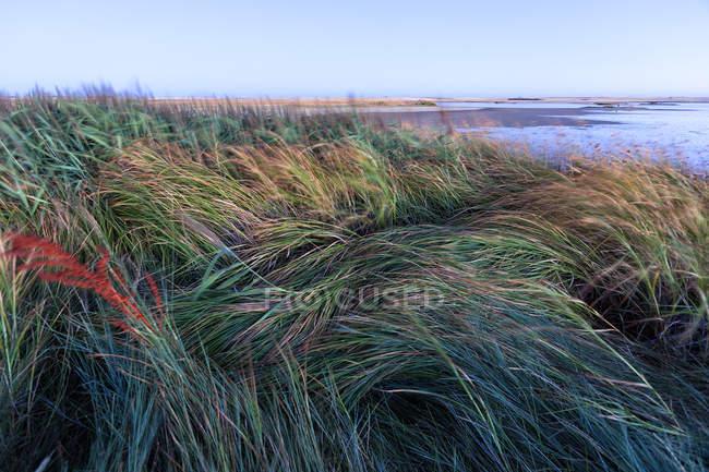 Espagne, Villafafila, herbes au bord du lac — Photo de stock
