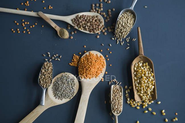 Красная чечевица, коричневая чечевица, амарант, пшеница, шпинат и кукуруза по ложкам — стоковое фото