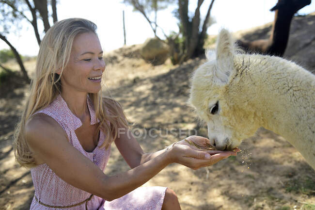 Blond mature woman with drinking young alpaca — Stock Photo