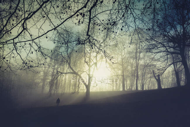 Sunrise and trees in the morning, one person walking on meadow - foto de stock