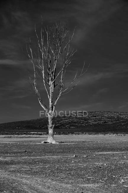 Africa, Sudafrica, paesaggio, bianco e nero — Foto stock