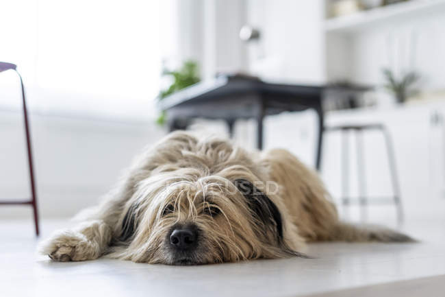 Bored dog waiting in office — Stock Photo