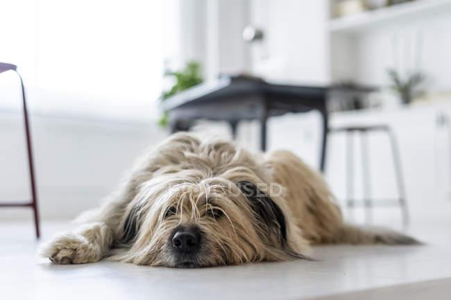 Нудно собака чекає в офісі — стокове фото