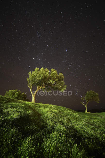 Spain, Cadaques, olive trees under starry sky — Stock Photo