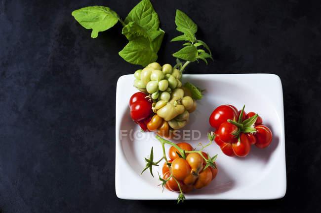 Tomates cherry 'Voyage' en un tazón en terreno oscuro - foto de stock