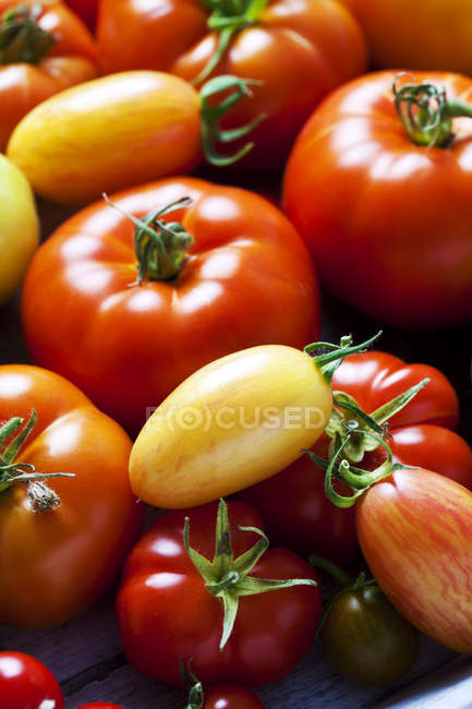 Various sorts of tomatoes, close-up — Stock Photo