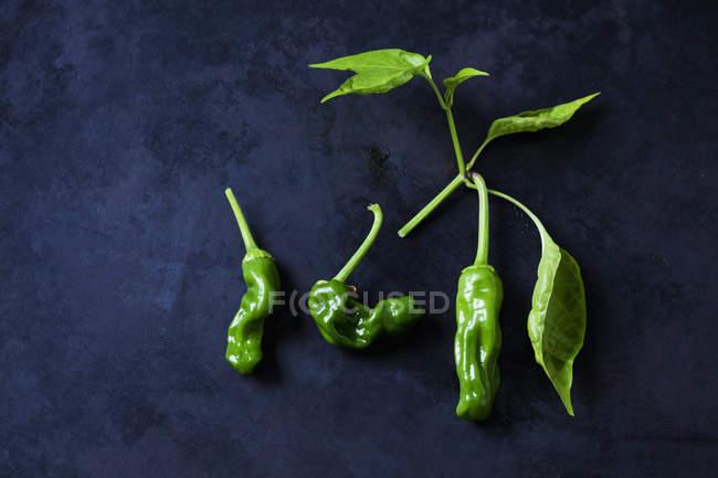Green peperonis aon dark background — Stock Photo