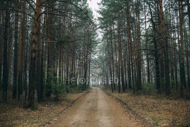 Vaciar pista forestal a través de pinos - foto de stock