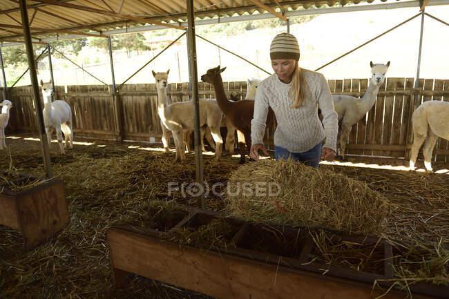 Зрелая женщина работает в конюшне — стоковое фото