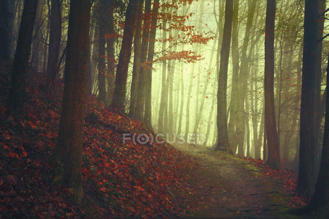 Autumn forest and empty forest path — Stock Photo