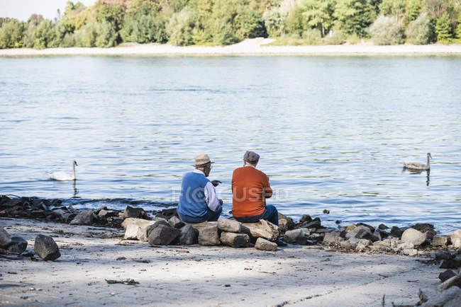 Двоє старих друзів, які сидять біля річки, дивляться лебеді — стокове фото