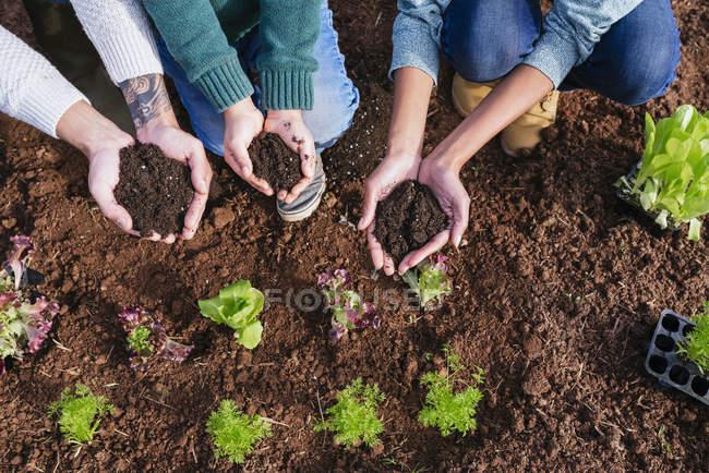 Plantation familiale de plantules de laitue dans le potager, montrant les mains, pleine de terre — Photo de stock