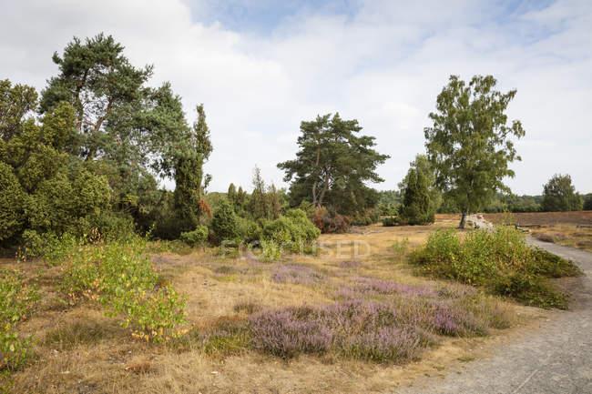Германия, Северный Рейн-Вестфалия, Muensterland, Westruper Heide, Hohe Mark Nature Park — стоковое фото