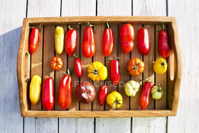 Трей с различными помидорами, стадия спелости, спелая — стоковое фото