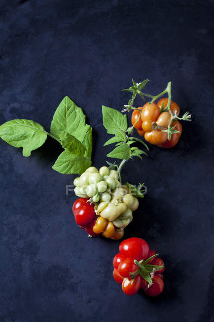 Cherry tomatoes 'Voyage' on dark ground — Stock Photo