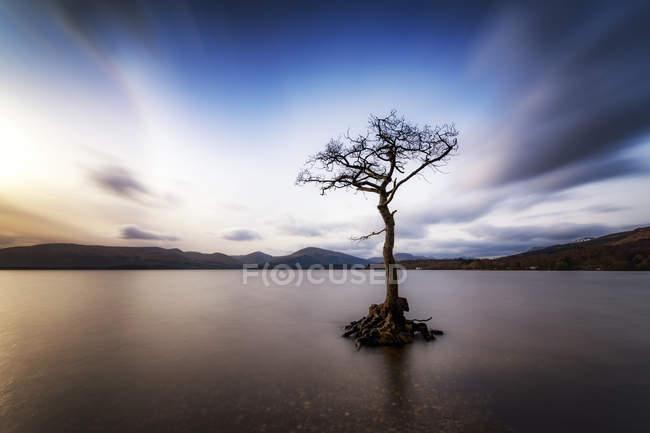 Grande-Bretagne, Écosse, Loch Lomond, Milarrochy Bay, Arbre solitaire — Photo de stock