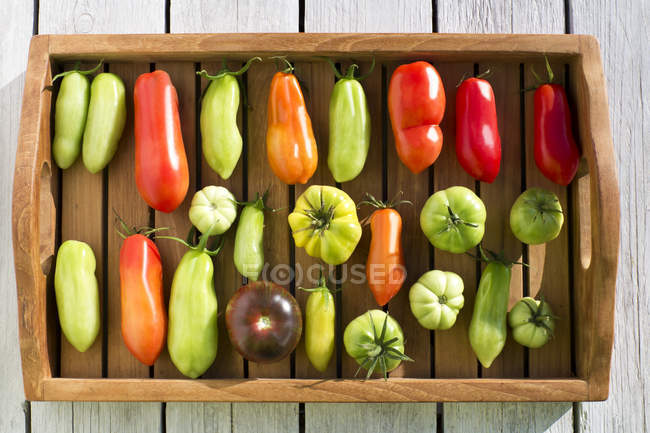 Tray with various tomatoes, stage of ripeness, unripe — Stock Photo