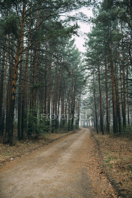 Empty forest track through pines — Stock Photo