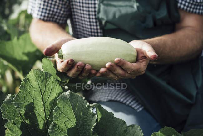 Обрезанный образ Гарсиа Муччини — стоковое фото