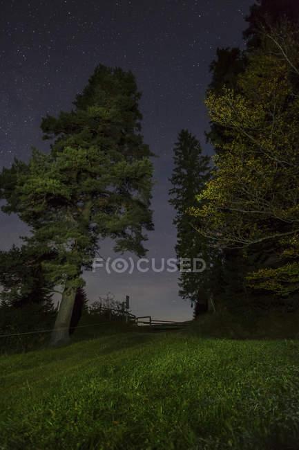 Germany, Bavaria, Allgaeu, Auerberg, trees under starry sky at night — Stock Photo
