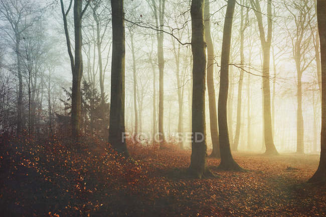 Autumn forest, red leaves — Stock Photo