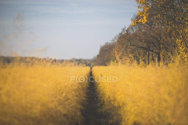 Asparagus field in autumn — Stock Photo