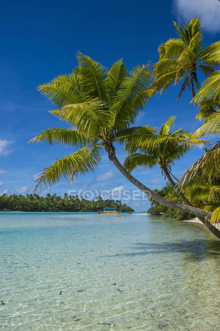 Islas Cook, Rarotonga, laguna de Aitutaki, playa de arena blanca y playa de palmeras - foto de stock
