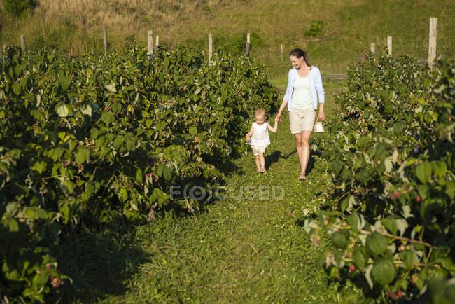 Mère et petite fille cueillant des framboises en été — Photo de stock