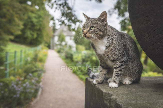 Germany, Weimar, portrait of tabby cat with Goethe Gartenhaus at Ilmpark in the background — Stock Photo