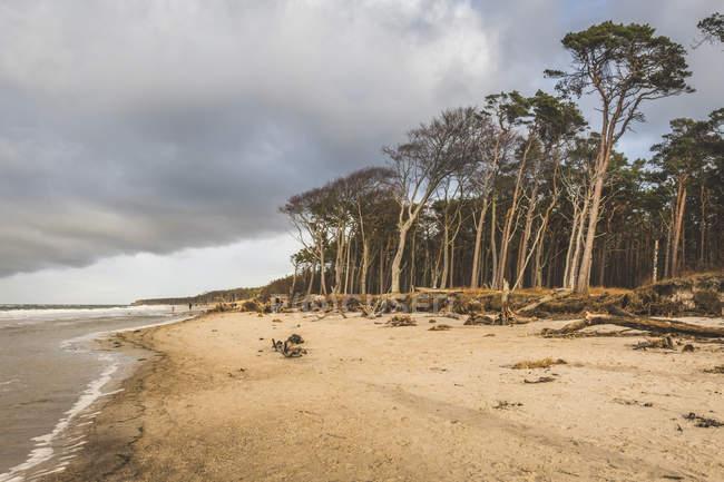 Germany, Mecklenburg-Western Pomerania, Darss, Ahrenshoop, West beach — Stock Photo