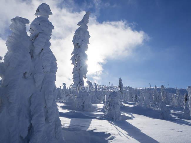 Німеччина, верхній Баварський ліс природний парк, зимовий краєвид з засніжені Хвойні дерева — стокове фото