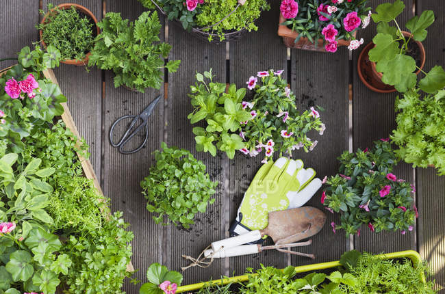 Planting herbs and flowers for indoor farming on a balcony — Stock Photo