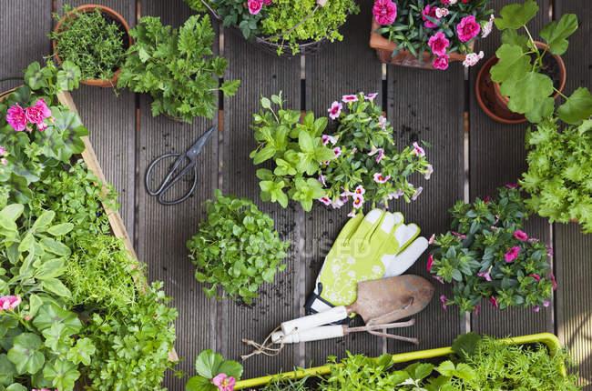 Planter des herbes et des fleurs pour l'agriculture d'intérieur sur un balcon — Photo de stock