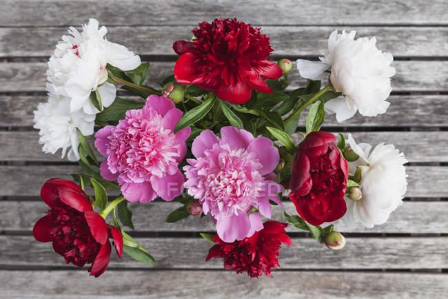 Bund weißer, roter und rosa Pfingstrosen — Stockfoto