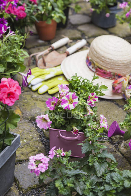 Various potted spring and summer flowers, straw hat, gardening tools and gloves on cabblestone pavement — Stockfoto
