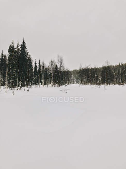 Finlande, Laponie, fortes chutes de neige et arbres — Photo de stock
