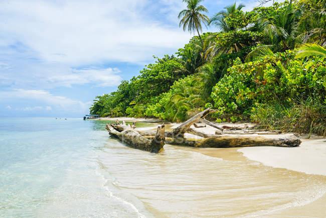 Панама, Бокас-дель-Торо, Кайо-Сапатілла, пляж — стокове фото