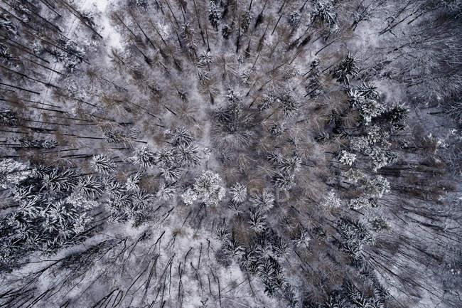Austria, Wienerwald, snowy forest in december, aerial view — Stock Photo