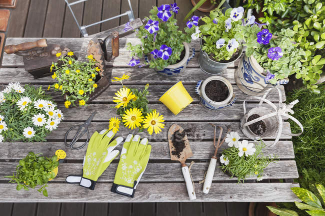 Different summer flowers and gardening tools on garden table — Stock Photo