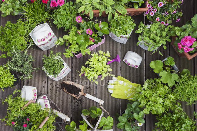 Planting herbs and flowers in to vintage storage pots for indoor farming — Stock Photo