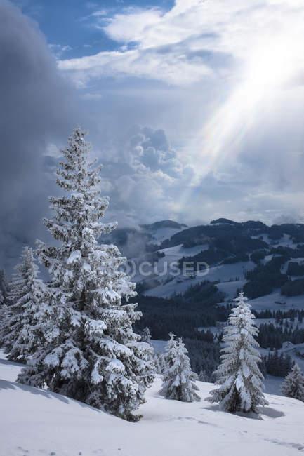 Allemagne, Bavière, Chiemgau, Chiemgau Alpes, Sachrang, Spitzstein en hiver — Photo de stock