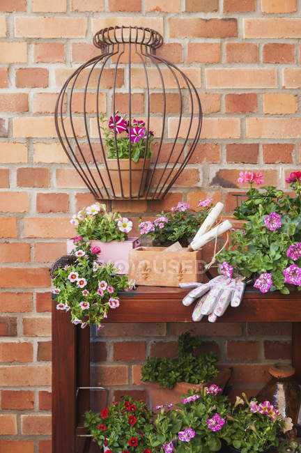 Various potted spring and summer flowers, gardening tools and gloves — Stock Photo
