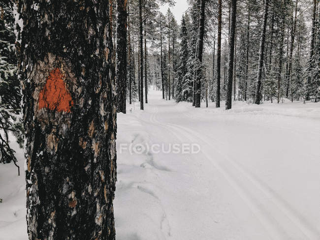Finland, Lapland, Cross-County Ski Run in Forest — Stock Photo