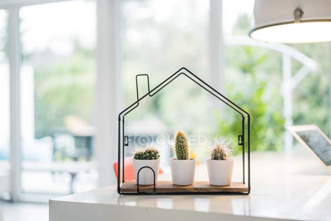 Tiny house model with cacti inside — Stock Photo
