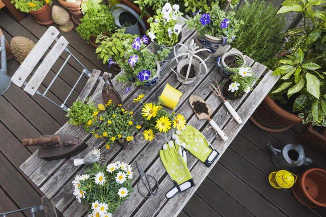 Diversi fiori estivi e attrezzi da giardinaggio sul tavolo da giardino — Foto stock